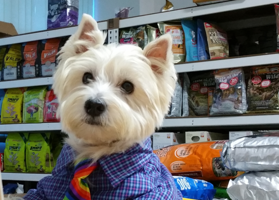 Kohepets - Credit Card Lifestyle Offers
